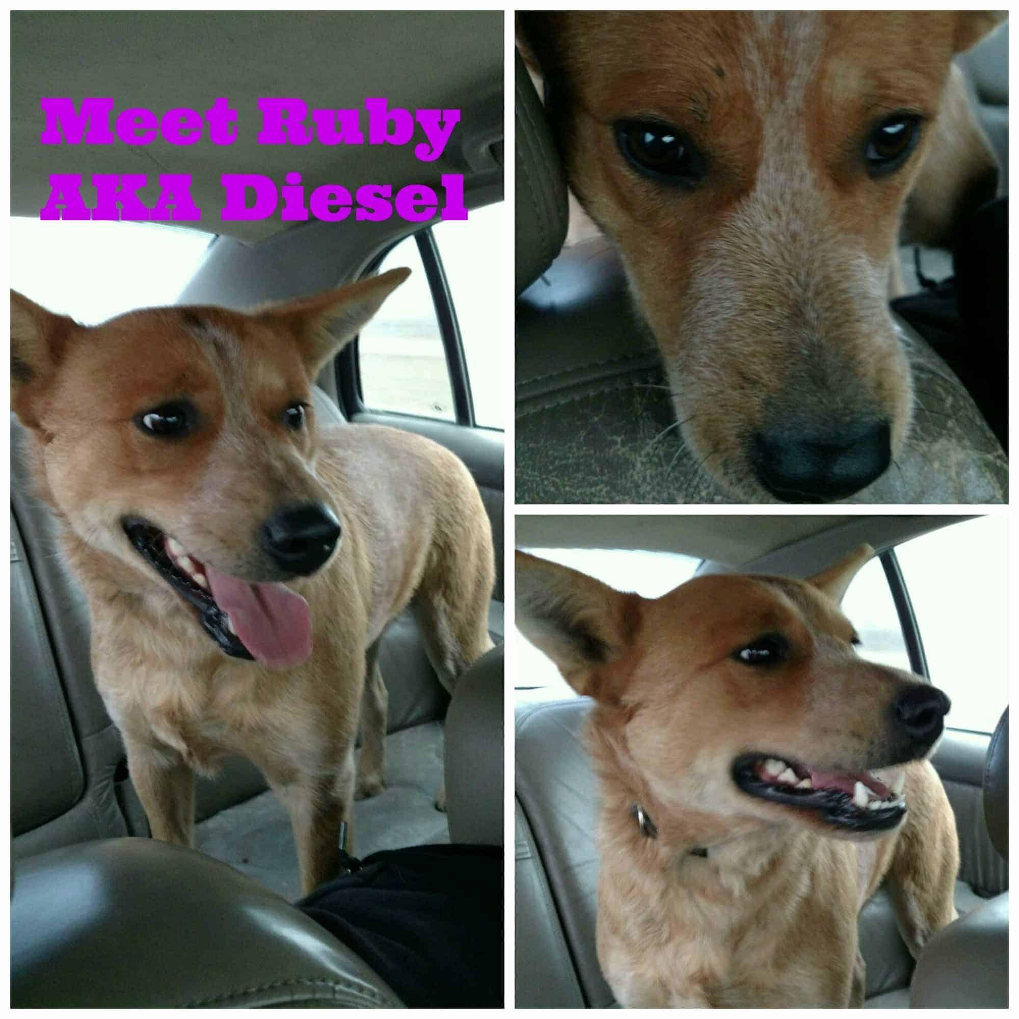 Meet Ruby AKA Diesel