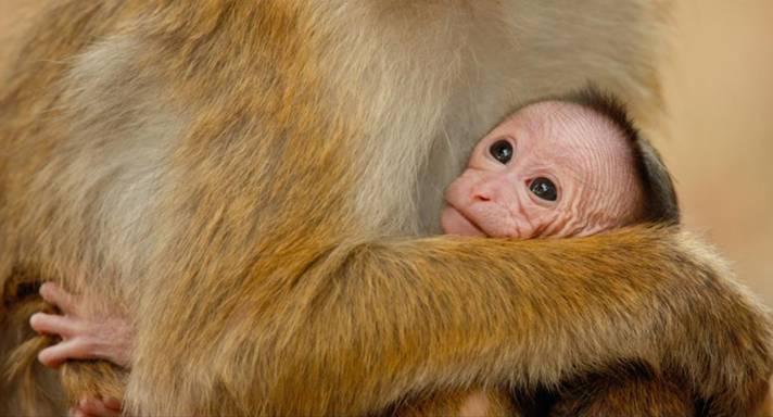 Monkey Kingdom by Disneynature