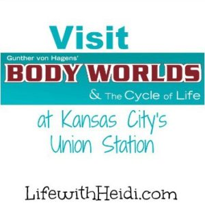 Body Worlds and The Cycle of Life