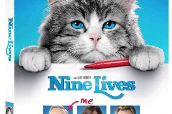 Ways to Plan A Cat Home Movie Night With Your Fuzzy Feline