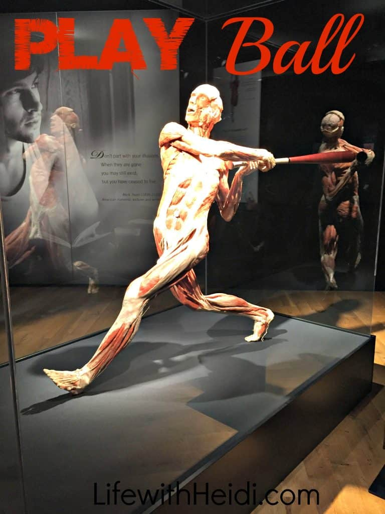 Play Ball at Body Worlds Cycle of Life