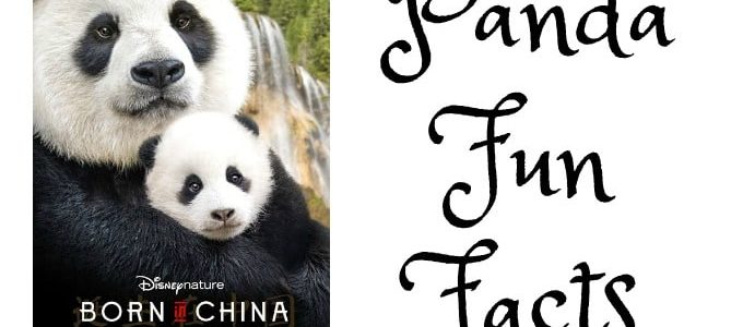 Born in China from Disneynature