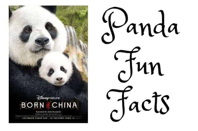Panda Fun Facts