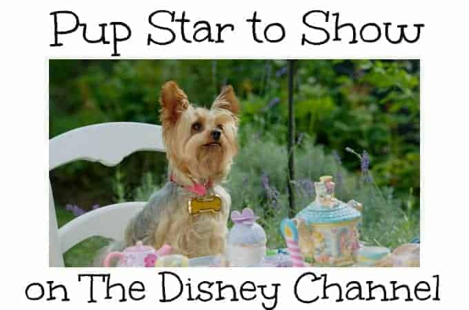 Pup Star to Show on The Disney Channel