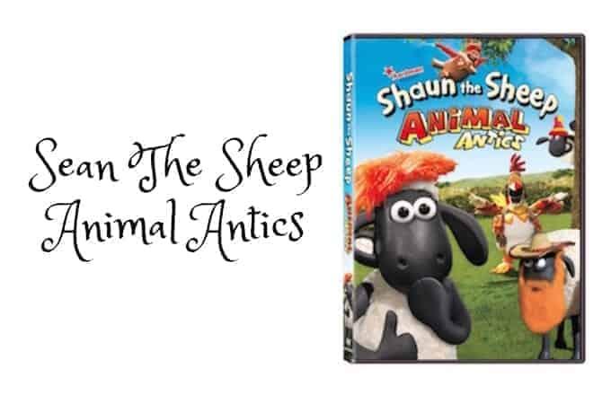 Sean The Sheep Animal Antics