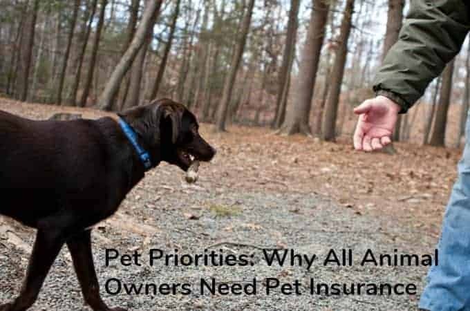 Pet Priorities: Why All Animal Owners Need Pet Insurance