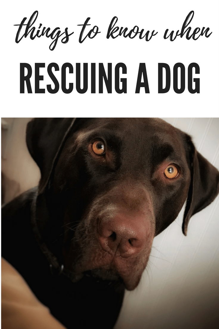 Things to know when rescuing a dog