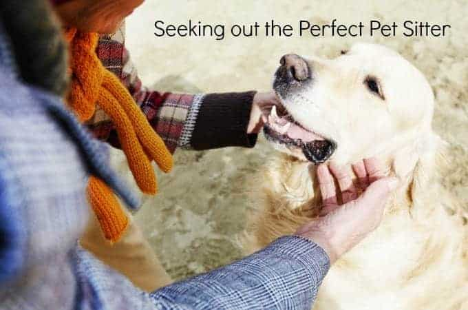 Seeking out the Perfect Pet Sitter