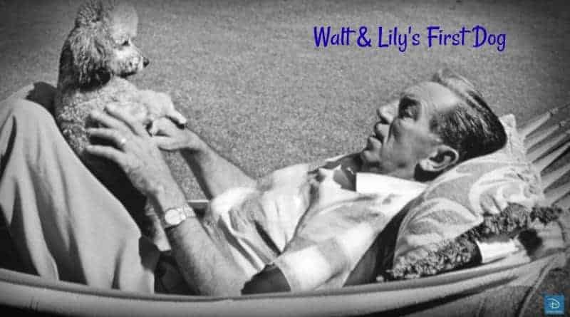 Walt & Lily's First Dog
