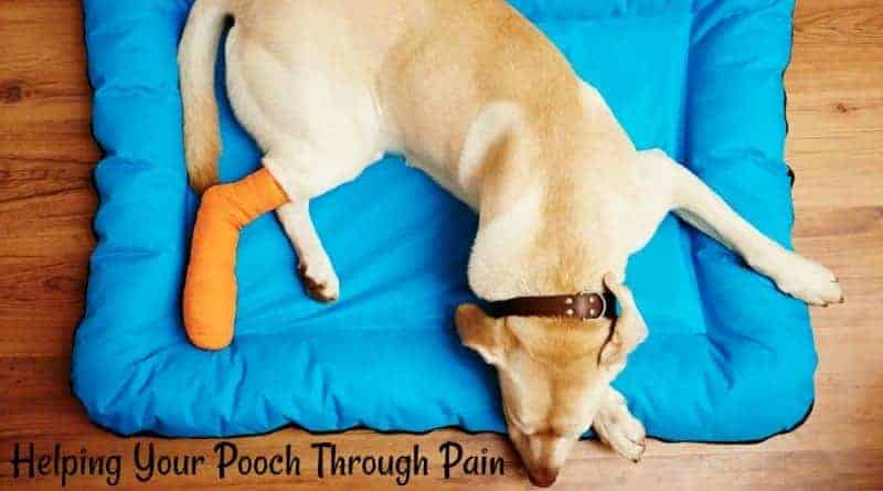Helping Your Pooch Through Pain