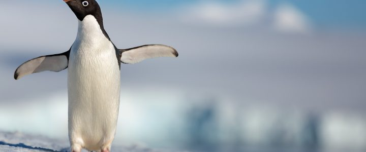 Penguins from DisneyNature