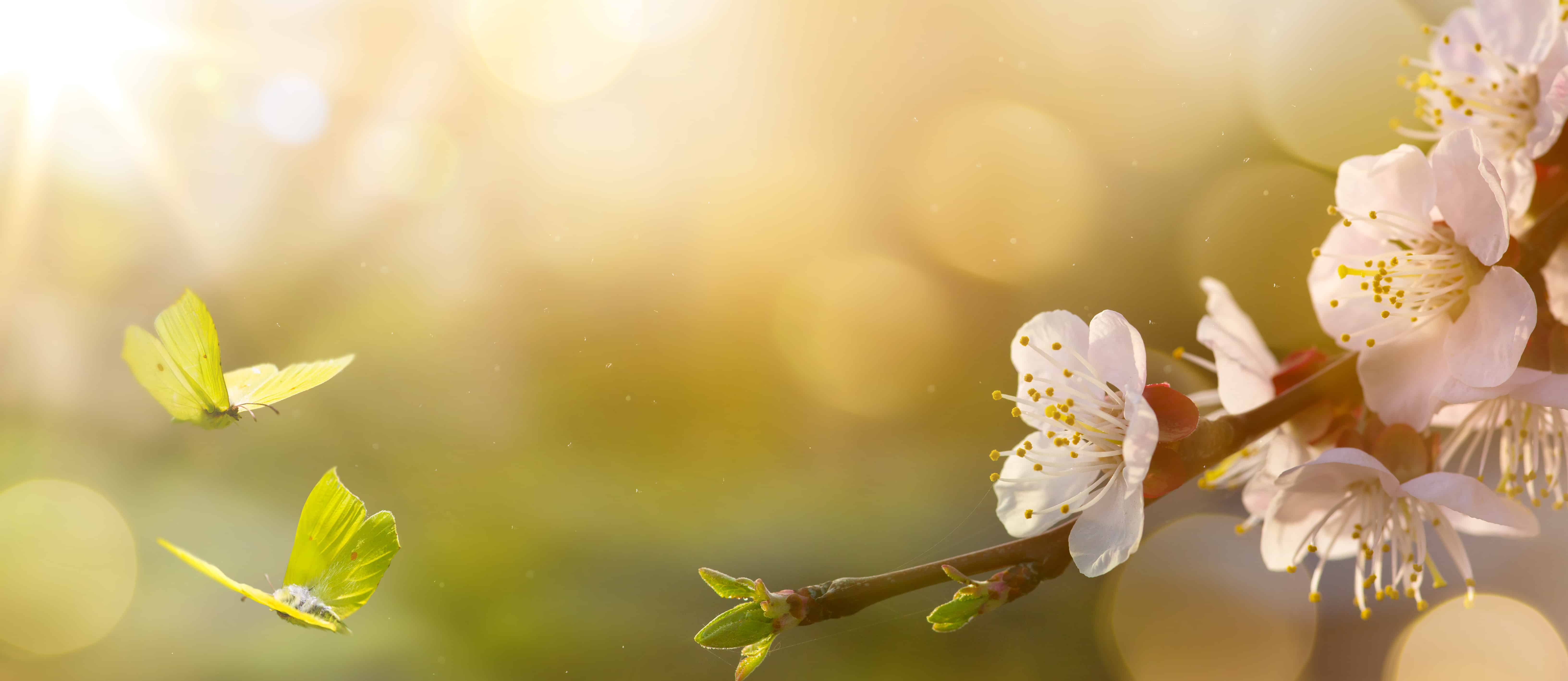 Keep Spring Allergies Away with These Essential Tips