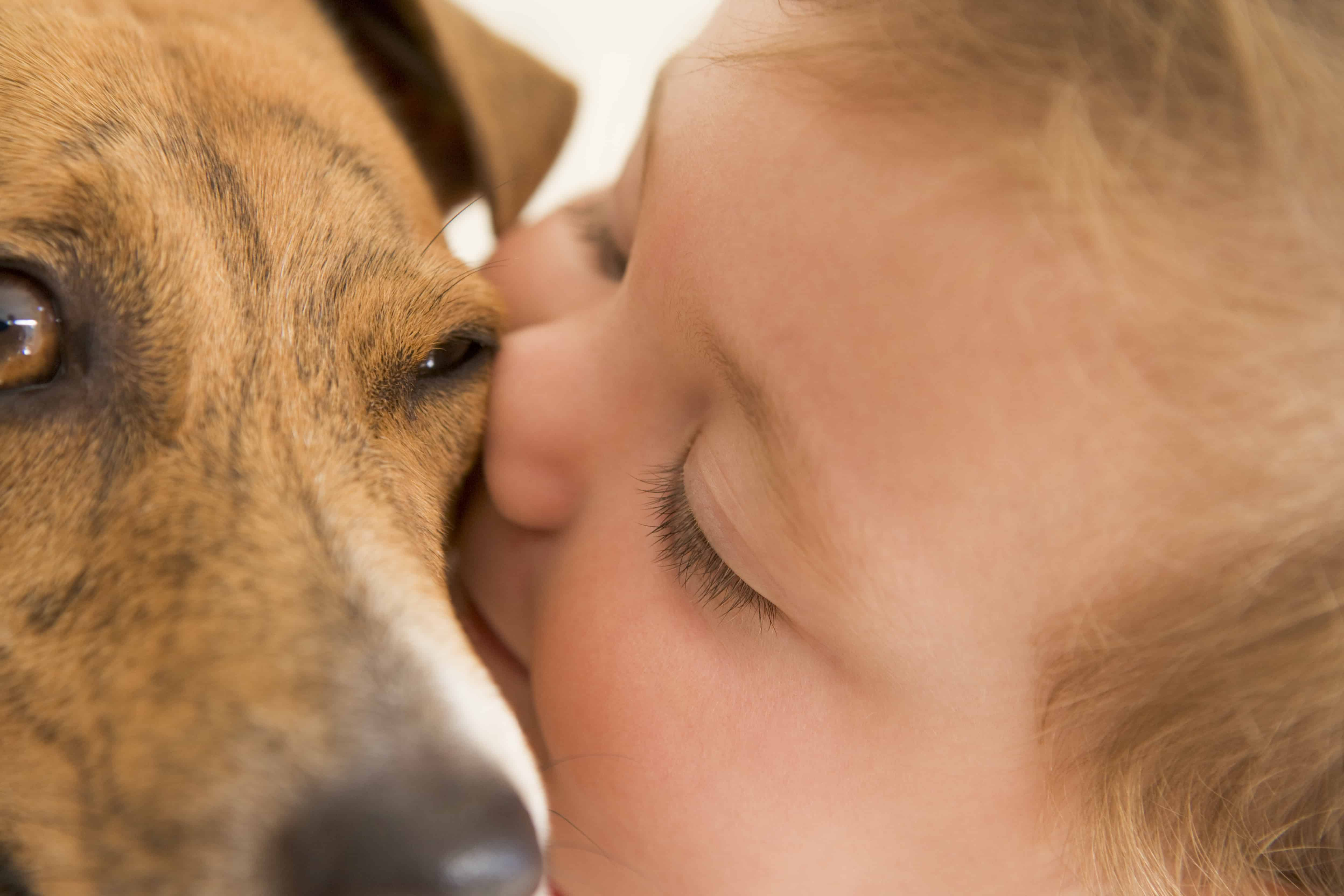 Tips for Introducing Your Child to a New Pet
