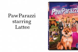 PawParazzi starring Lattee