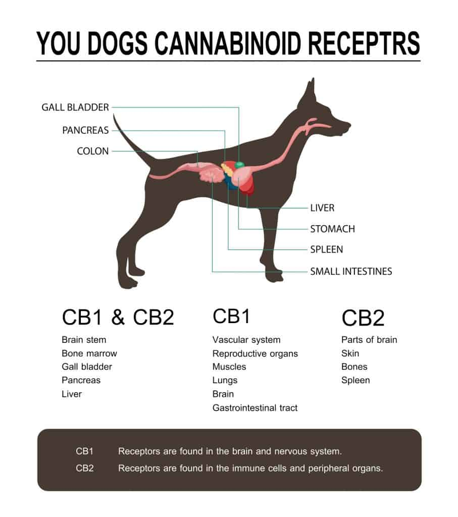 5 Reasons To Treat Your Pets With CBD