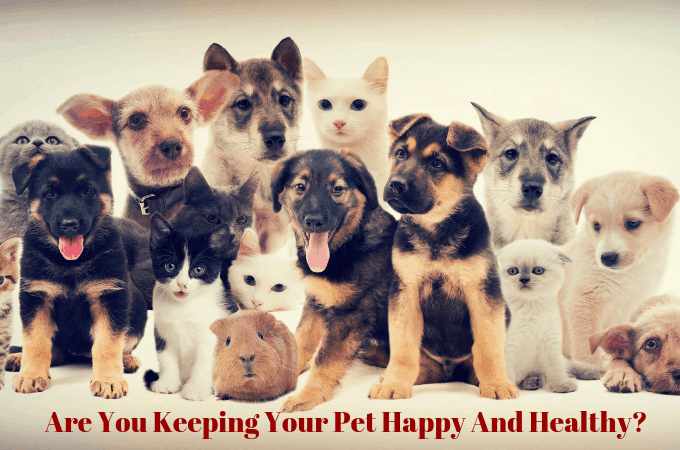 Are You Keeping Your Pet Happy And Healthy?