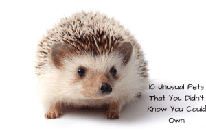 10 Unusual Pets That You Didn't Know You Could Own