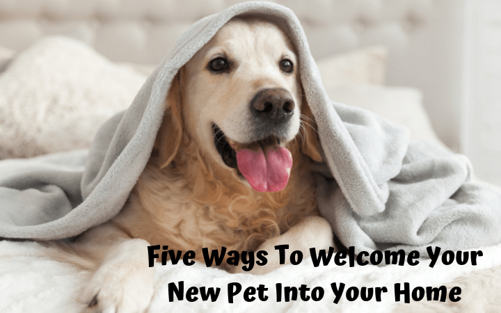 Five Ways To Welcome Your New Pet Into Your Home