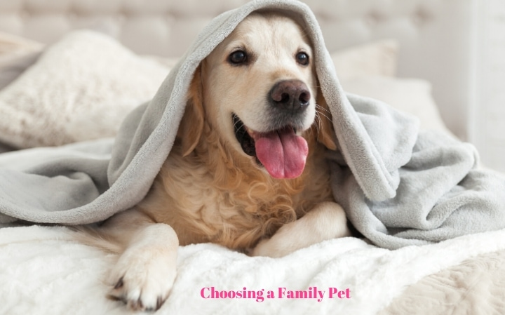 How to Choose a Family Pet