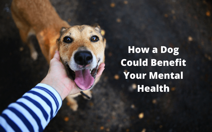 How a Dog Could Benefit Your Mental Health