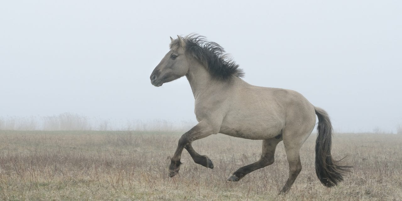 Horses: The Pet That Everyone Forgot About