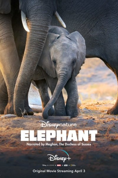Elephants from DisneyNature