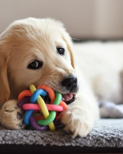 Obedience Training Tips for puppies