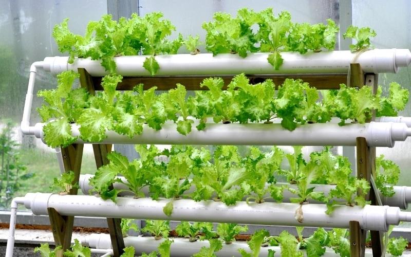 Creative Gardening Tips